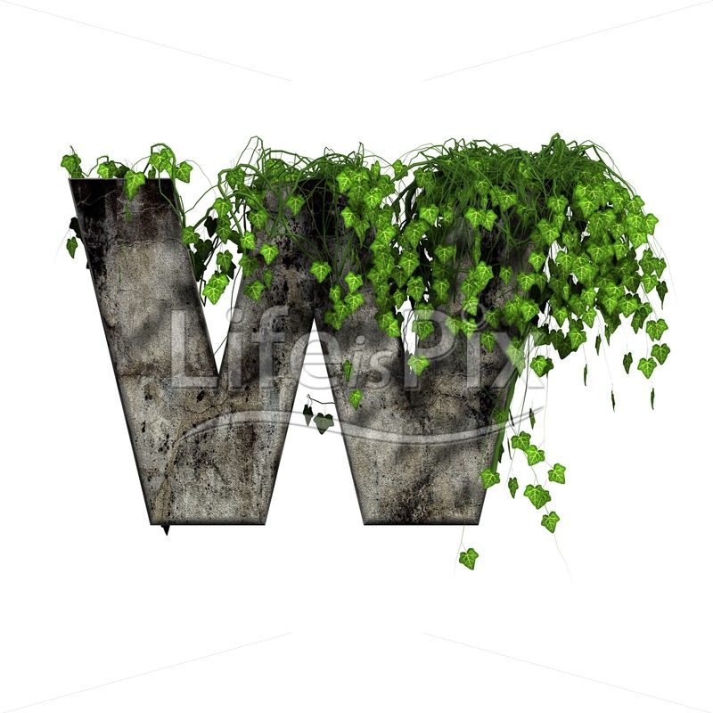 3d stone capital letter and green ivy – w - Royalty free stock photos, illustrations and 3d letters fonts