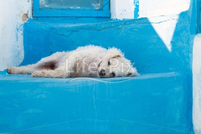 Dog on blue stairs - Royalty free stock photos, illustrations and 3d letters fonts