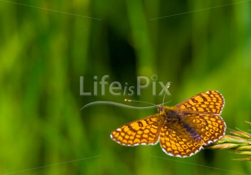 Orange butterfly on green background - Royalty free stock photos, illustrations and 3d letters fonts