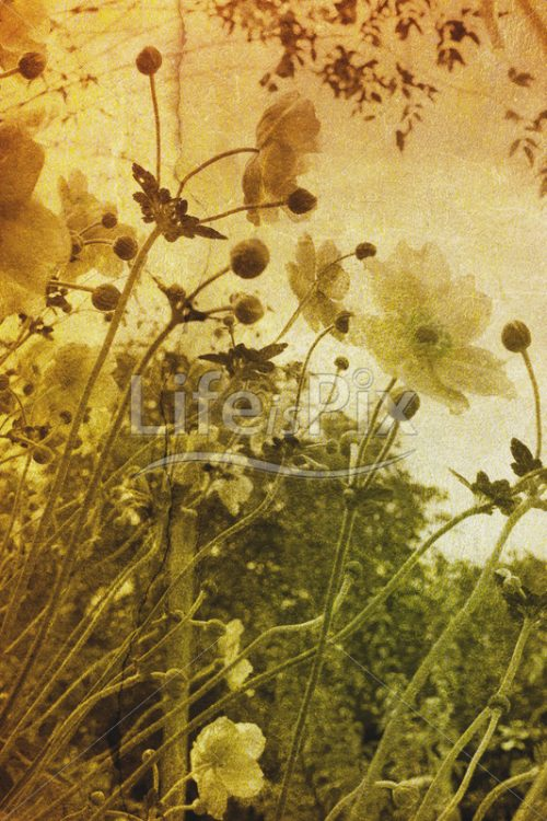 Vintage flowers photo - Royalty free stock photos, illustrations and 3d letters fonts