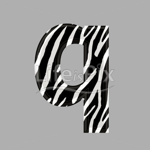 Zebra font – lower case q – 3d illustration – Royalty free stock photos, illustrations and 3d letters fonts