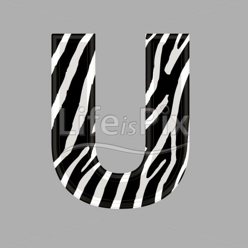 Zebra letter – capital U – 3d illustration – Royalty free stock photos, illustrations and 3d letters fonts