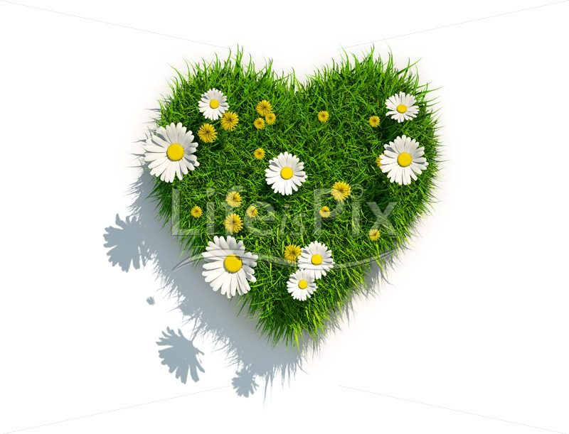 grass heart on white background - Royalty free stock photos, illustrations and 3d letters fonts