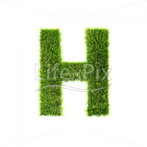 grass letter isolated on white background – H – Royalty free stock photos, illustrations and 3d letters fonts