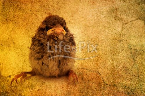 grungy photograph of little bird - Royalty free stock photos, illustrations and 3d letters fonts