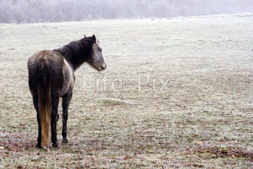 horse in winter landscape - Royalty free stock photos, illustrations and 3d letters fonts
