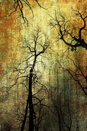 scary forest – Royalty free stock photos, illustrations and 3d letters fonts