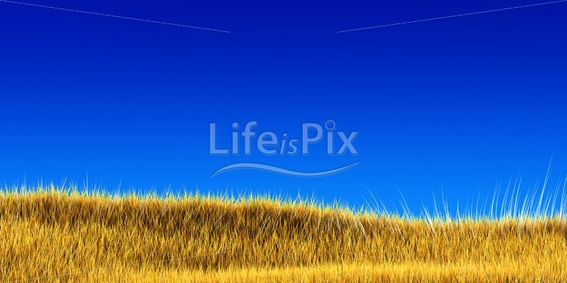 yellow grass under blue sky – Royalty free stock photos, illustrations and 3d letters fonts