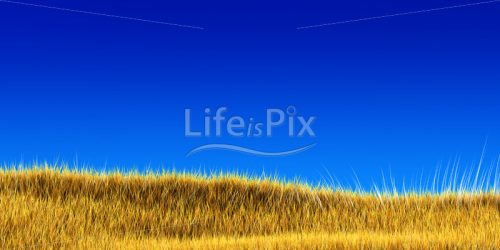 yellow grass under blue sky – 3d illustration - Royalty free stock photos, illustrations and 3d letters fonts