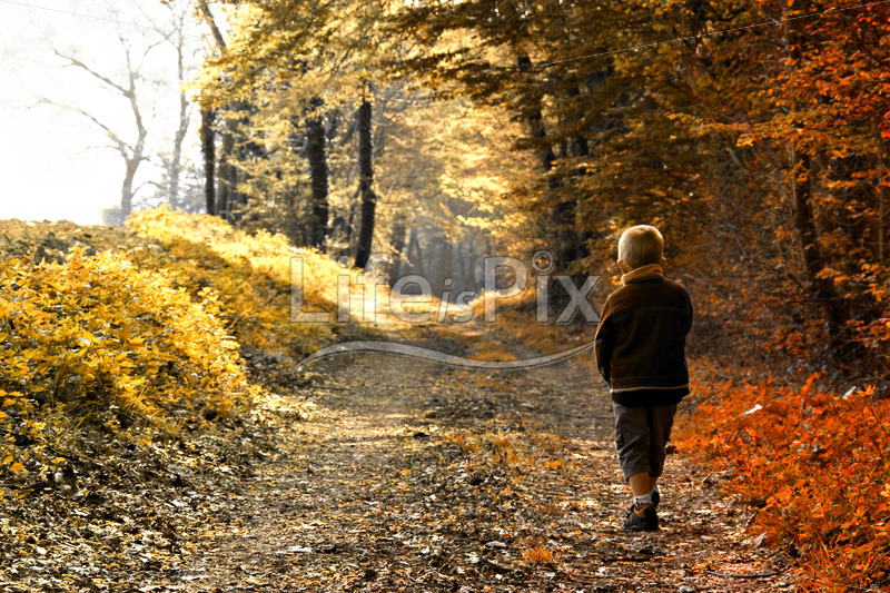 young child in autumn forest - Royalty free stock photos, illustrations and 3d letters fonts